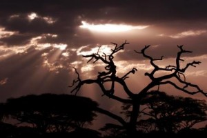 Sonnenuntergang im Ngorongoro Nationalpark