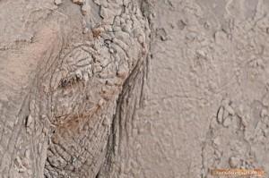 Ein Elefant nach intensivem Schlammbad im Hwange Nationalpark