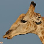 Simbabwe Abenteuer: Zu Fuss im Hwange Nationalpark
