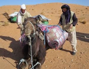 Kamele tragen unser ganzes Gepäck