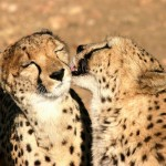Single Urlaub als Rundreise in Namibia