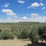 Ein Wochenende in Jaén und Medina Azahara bei Cordoba