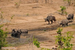 An den Tchakabika Quellen im Hwange Nationalpark