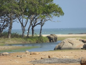 Elefanten im Yala Nationalpark