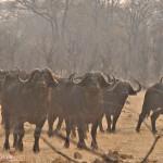 Simbabwe Abenteuerreise – Wildnis Hwange Nationalpark