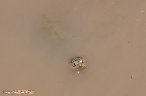 Simbabwe Safari Erlebnis – Kazuma Pan Nationalpark