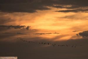 Sonnenuntergang am Zambezi-Fluss