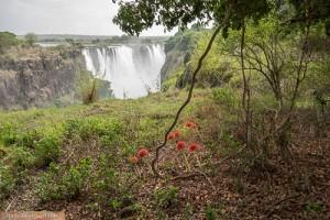 Blutblumen vor den Main Falls, Victoria Falls