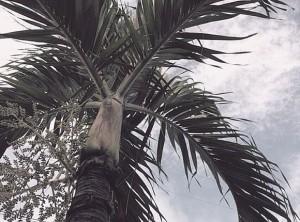 blauer Himmel über Florida