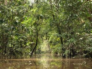 Einblick in den Varzea-Wald während der Regenzeit