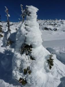 """drunter steckt ein Baum, die Kanadier nennen das dann """"snow ghost"""""""