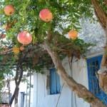 Singlereise nach Griechenland