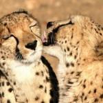 Gruppenreise für Singles nach Namibia