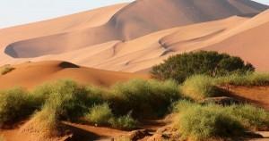Namibia Naukluft Park Sossusvlei