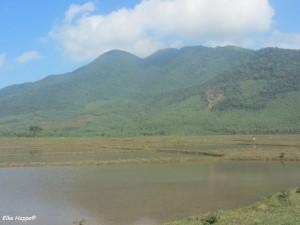 Reisfelder auf dem Weg zum Wolkenpass