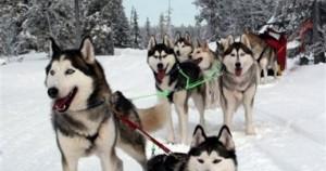 Mehere Single Reisen nach Lappland