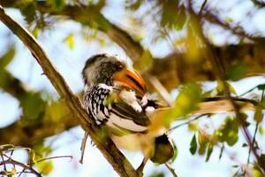 Vögel in Namibia