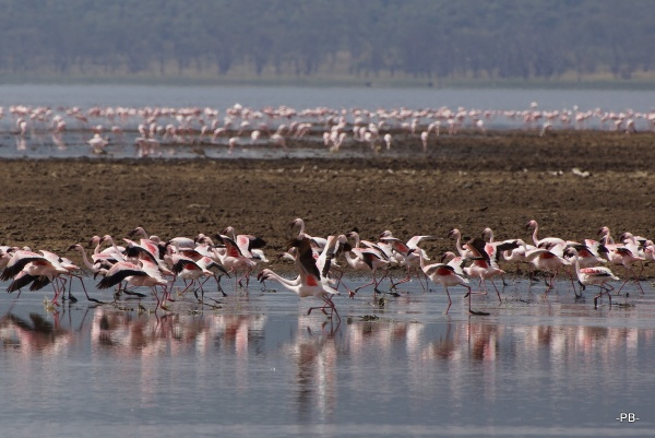 Count Down: Flamingos 3-2-1-Start!
