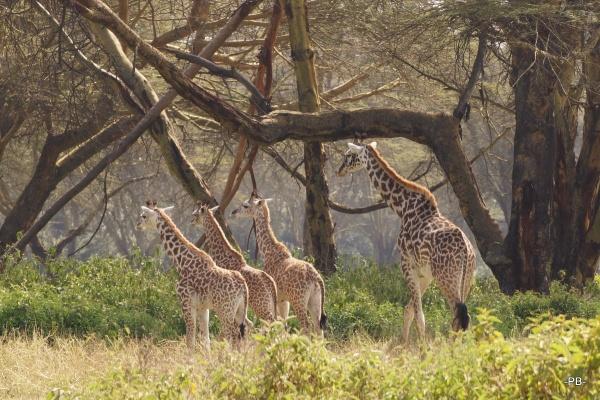 Auch Giraffen fangen erst einmal klein an