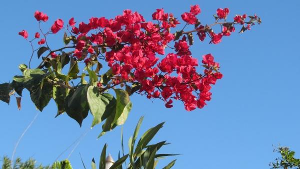 Auch im türkischen Winter leuchtende Blütenpracht