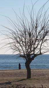 Seltener Anblick : Muslima am Strand