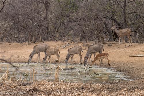 Selbstfahrer Safari in Südafrika - Marakele Nationalpark