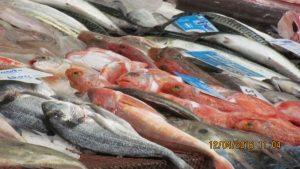 Frischer Fisch in Matosinho