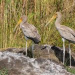 Botswana Selbstfahrer Reise – zum Chobe Nationalpark