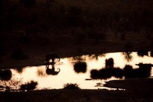 Blick von der Bar der Victoria Falls Safari Lodge auf das Wasserloch