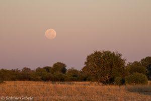 Der volle Mond geht auf ueber dem Grasland von Hwange