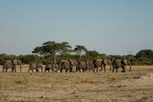 Eine Elefantenherde bei Hwanges Nyamandhlovu Wasserloch