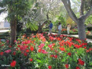 """der Garten """"Huerto Calixto und Malibea"""""""