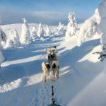 Auf Reisen als Single nach Schwedisch Lappland