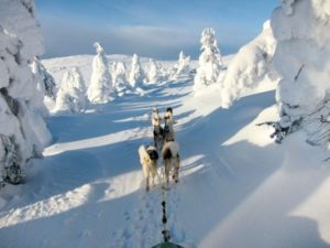 Singlereise Lappland Husky Tour