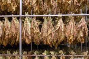 Getrockneter Tabak