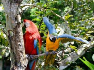 Reisen als Single an den Amazonas