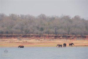 Elefanten beim Trinken und Baden im Karibasee