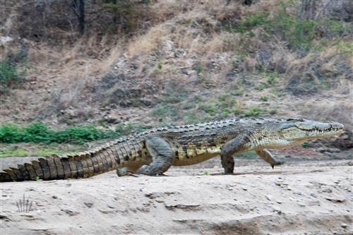 matusadona nationalpark simbabwe sanyati schlucht