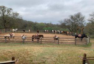 Pferde im Hyatt Regency